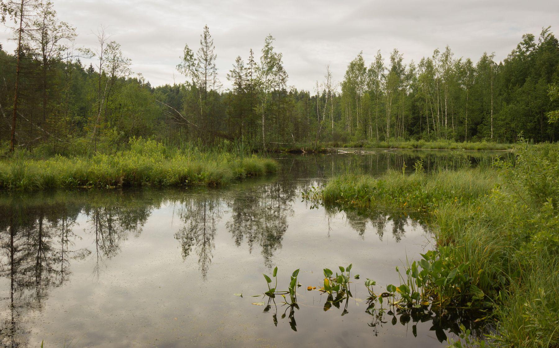 *** болото лес