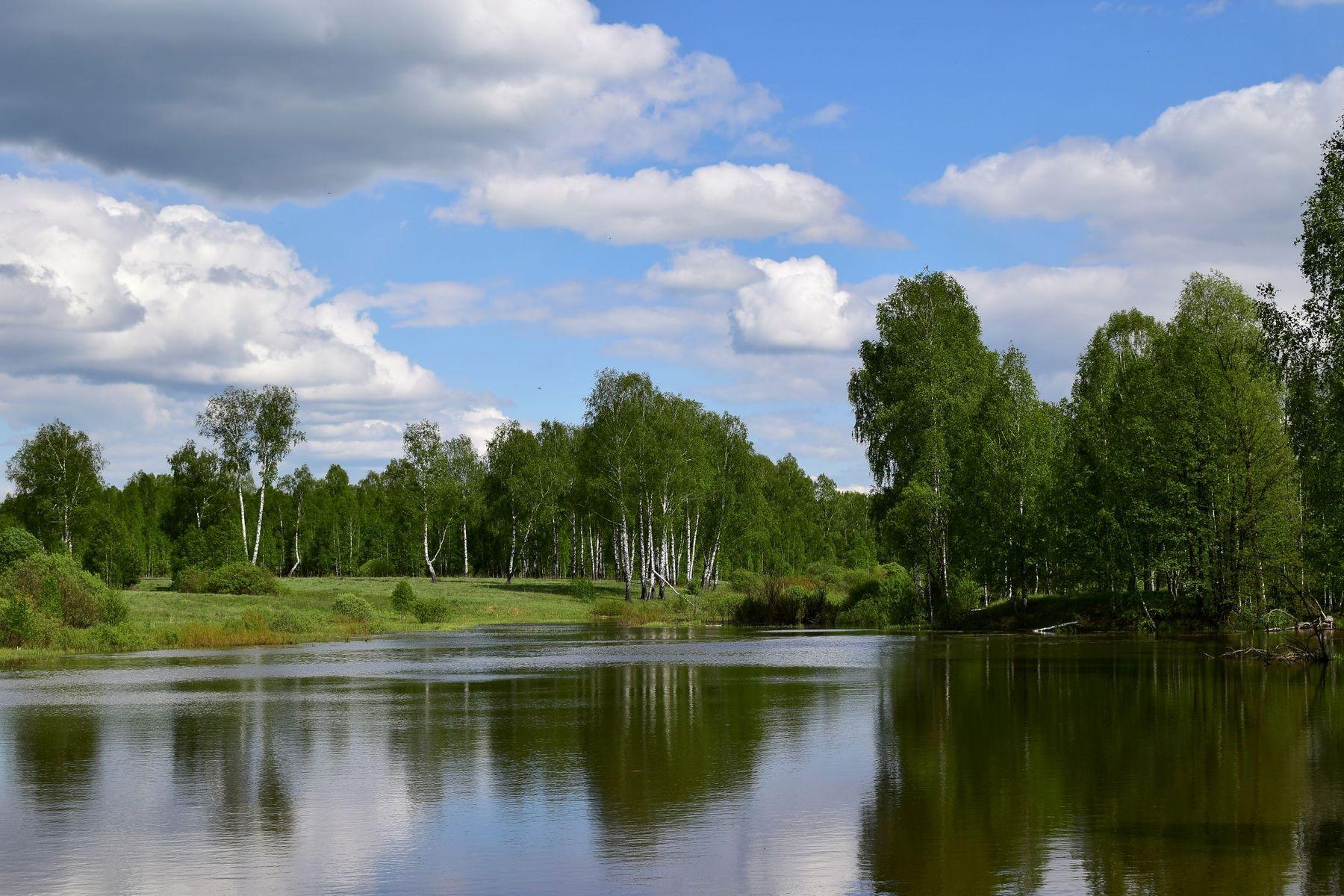 Деревня Кивчей, старый пруд. Пруд Деревня Весна
