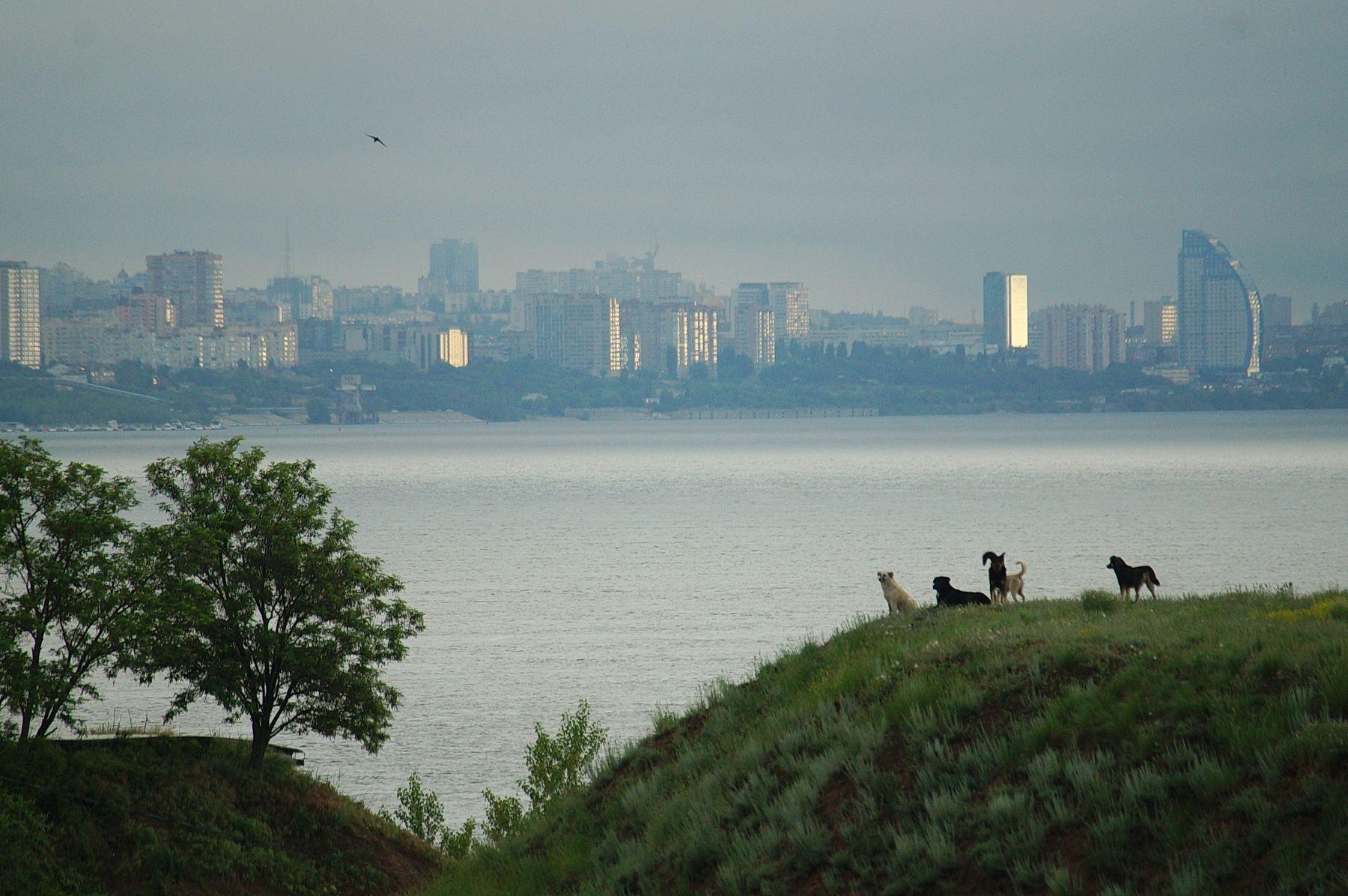 Утренний пейзаж Волгоград река лето берег утро