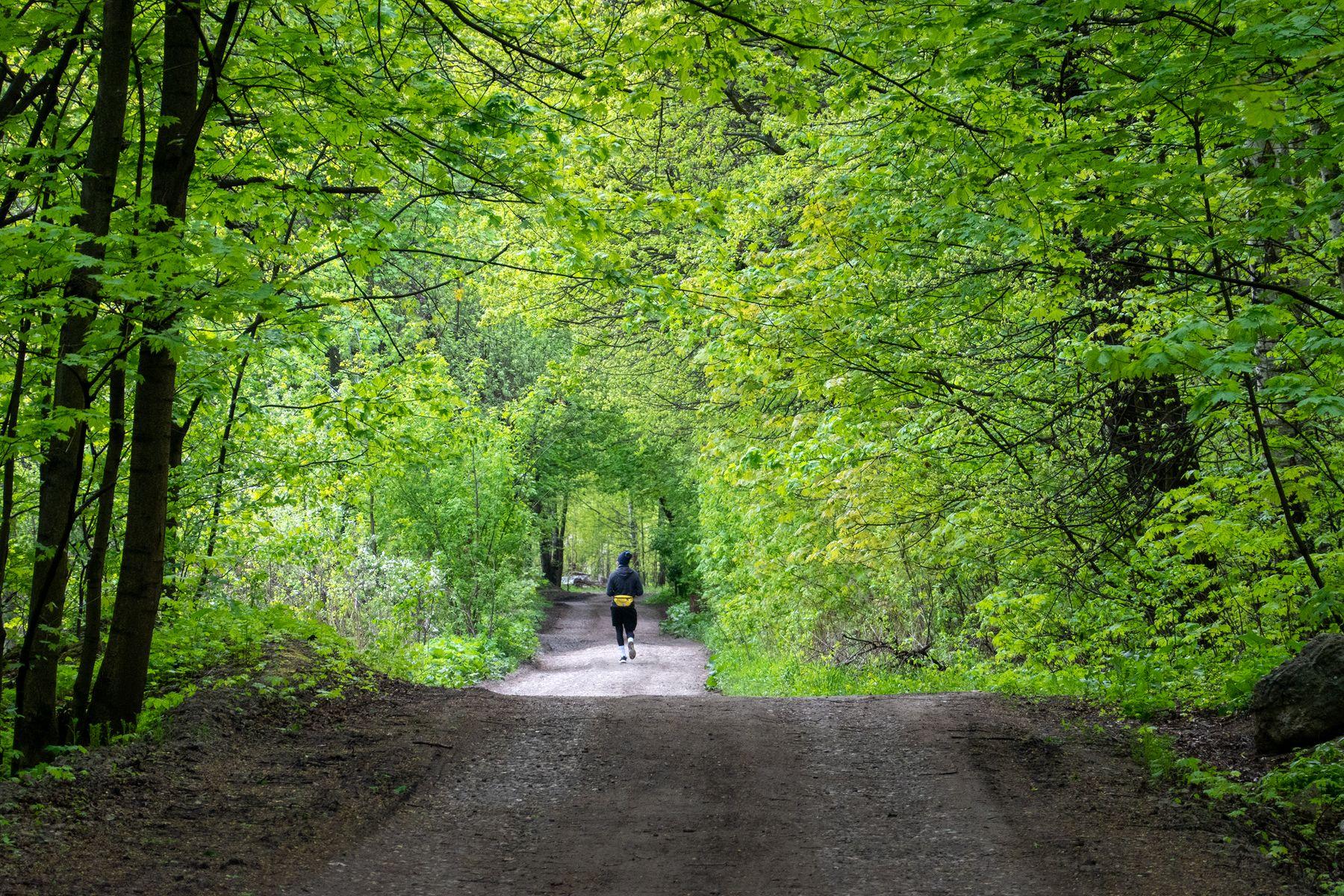 Практически Форрест Гамп антонмазаев antonmazaev лес москва лосиный остров пейзаж спортсмен