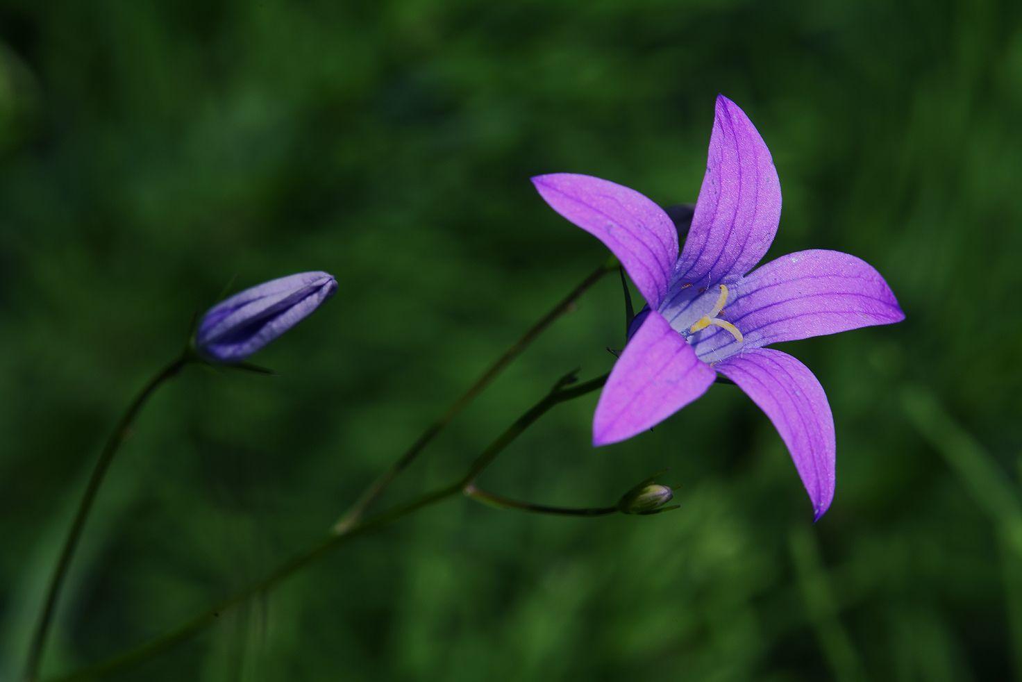 *** трава цветок поляна