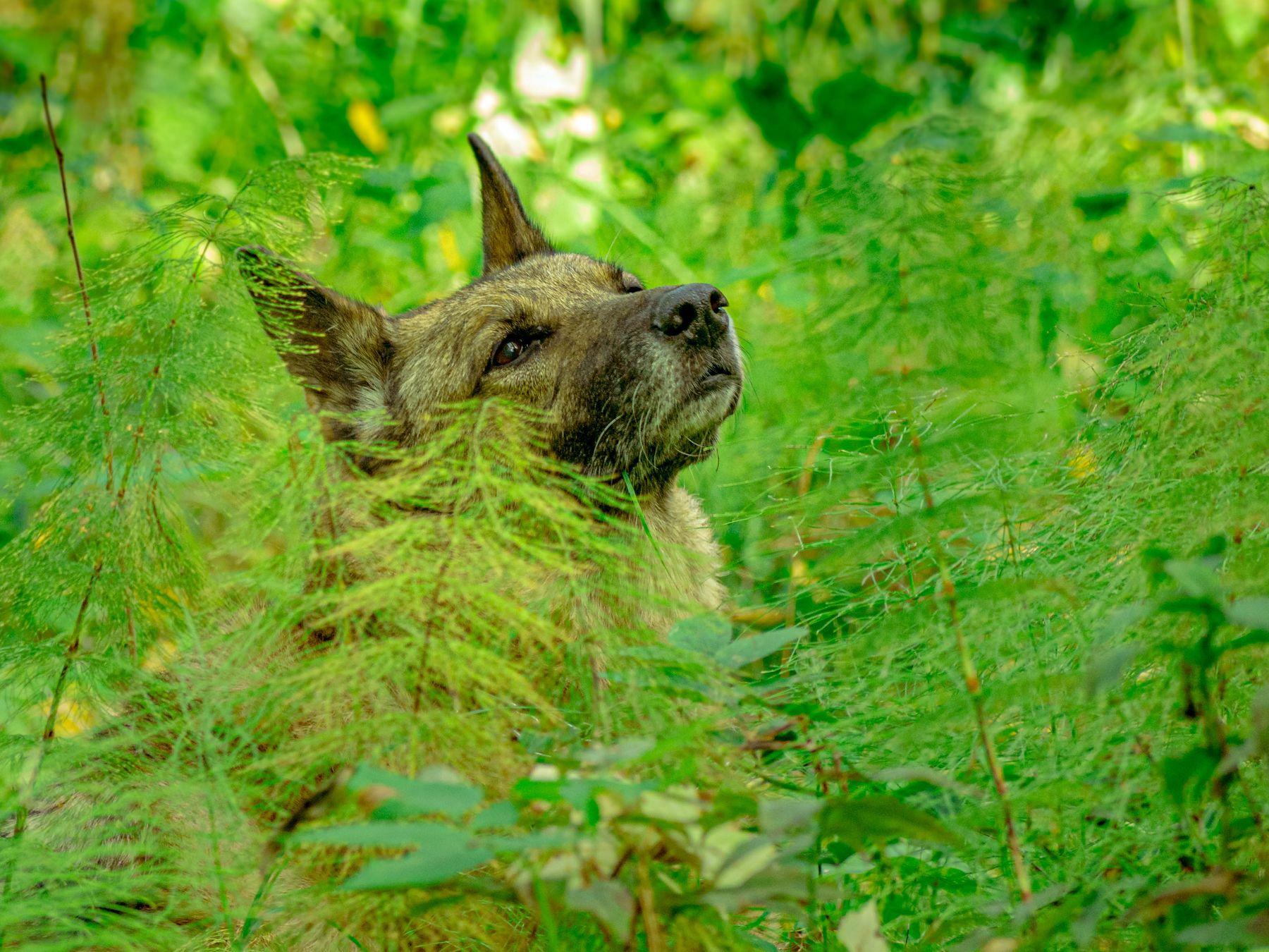 Дуся слушает тишину леса Собака лес