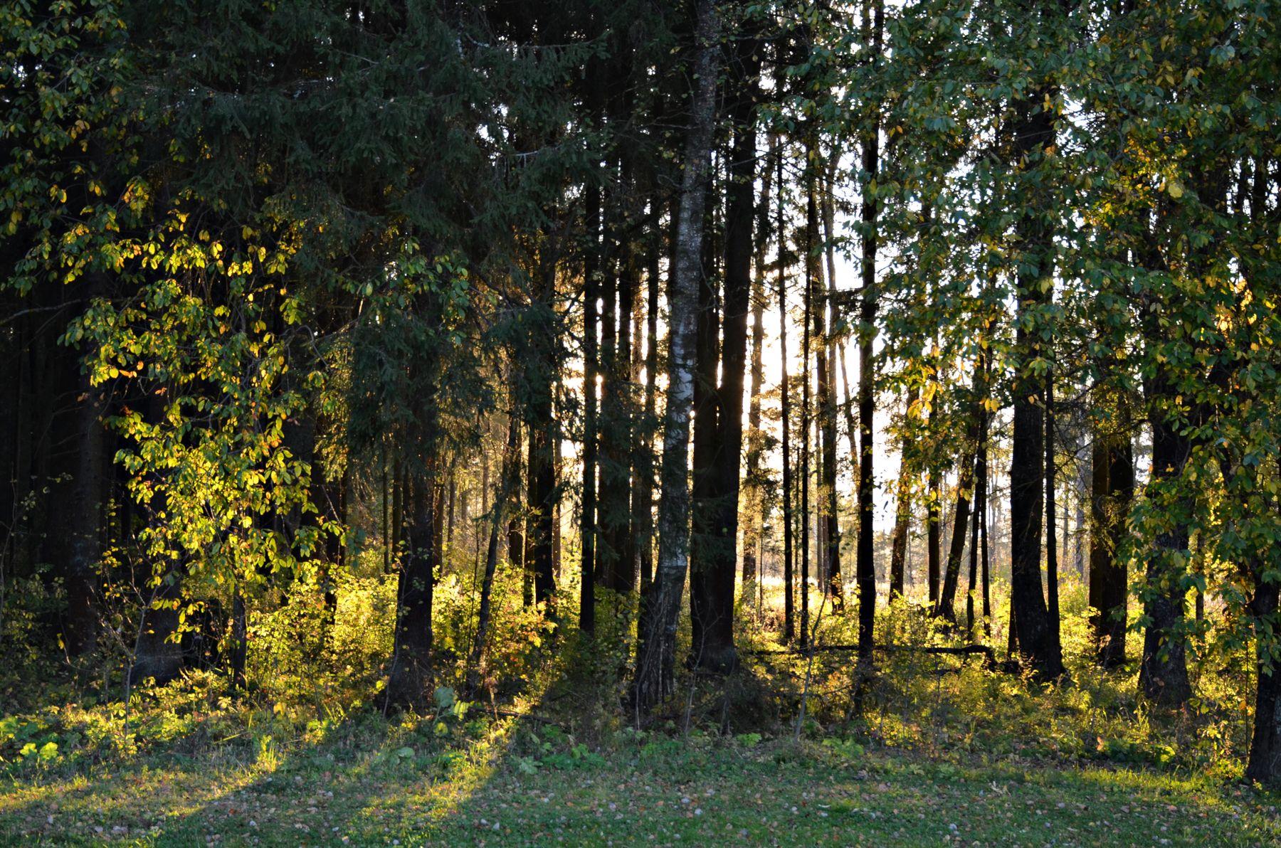 *** Москва Новофёдоровское лес прогулка сентябрь осень закат