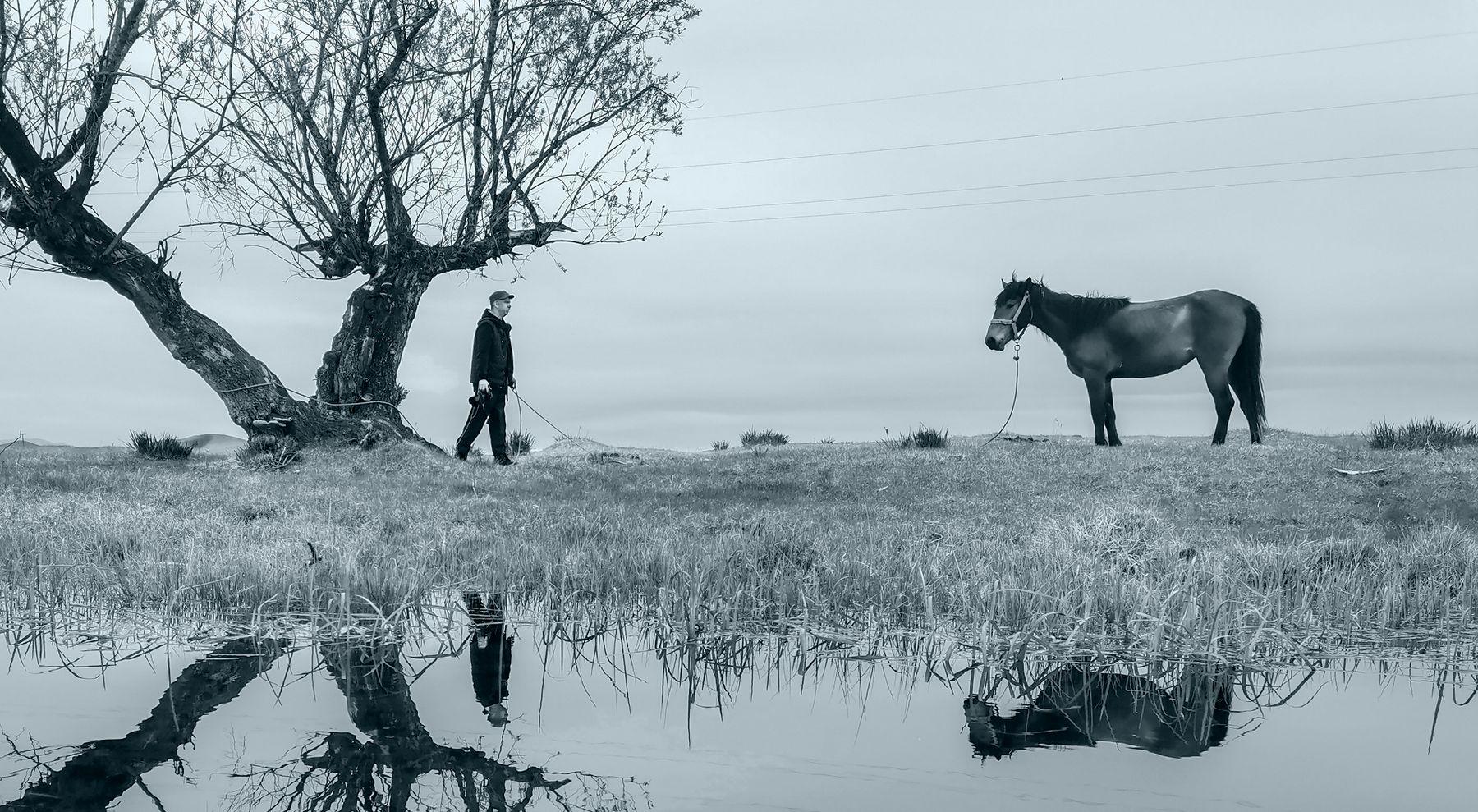 Разговор с лошадью
