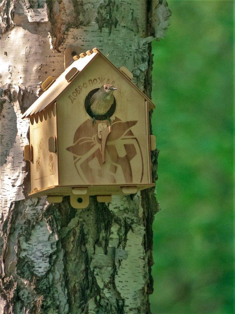 Часы с кукушкой Птицы лес природа