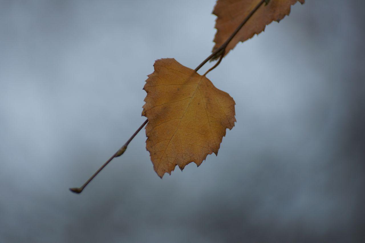 Свидание с осенью