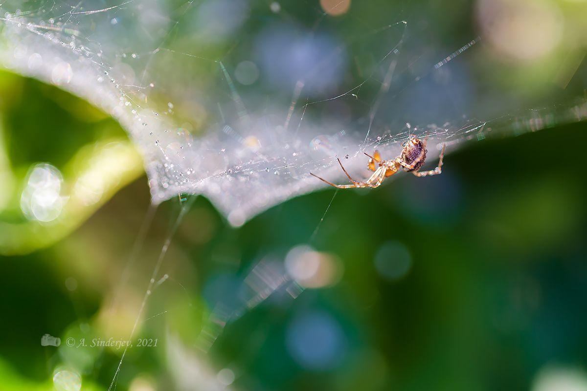 Паучок на паутине паук насекомое природа