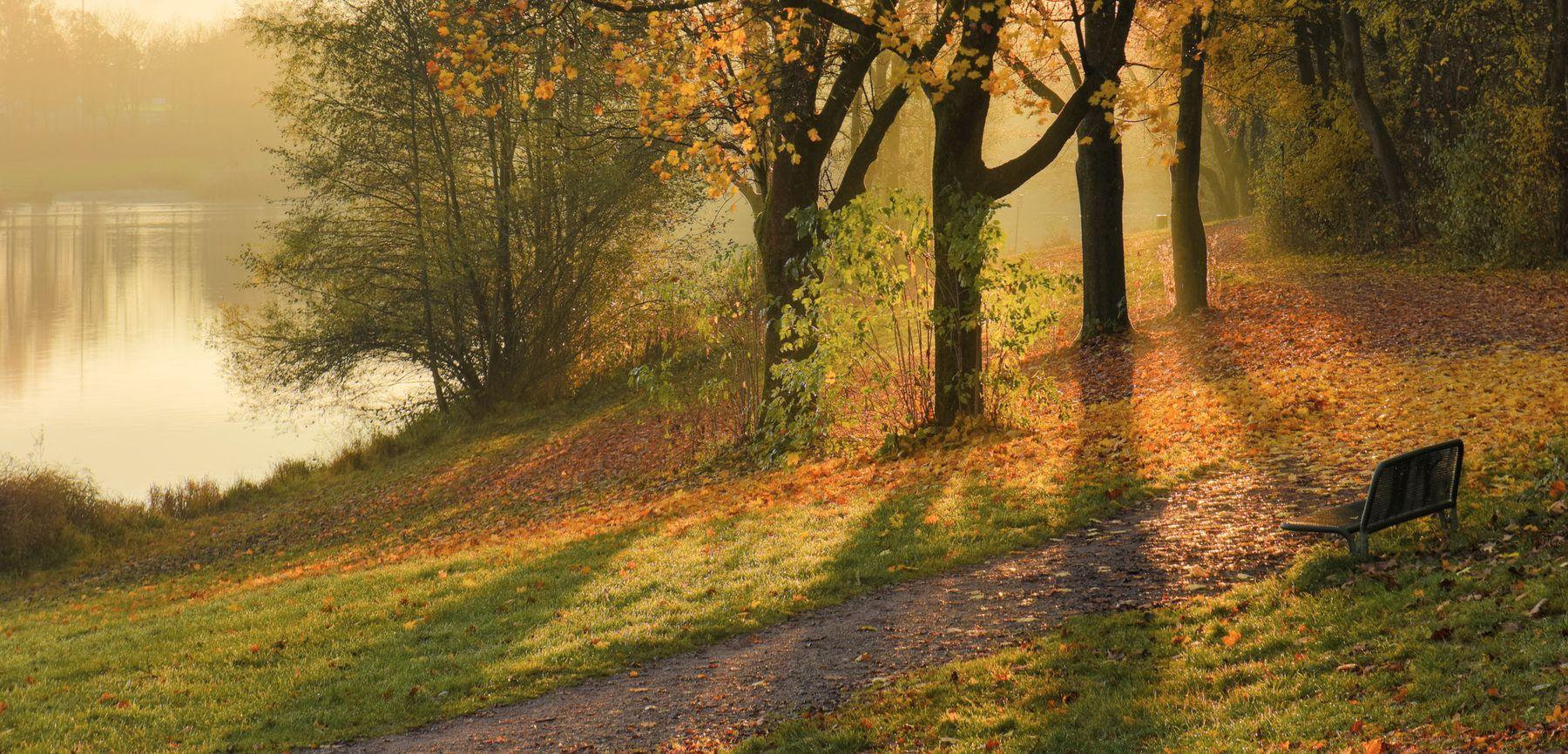 Пустая скамейка утро осень деревья свет