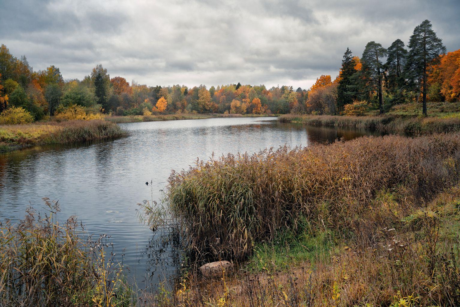Гатчина. Осень. гатчина осень пейзаж пруд