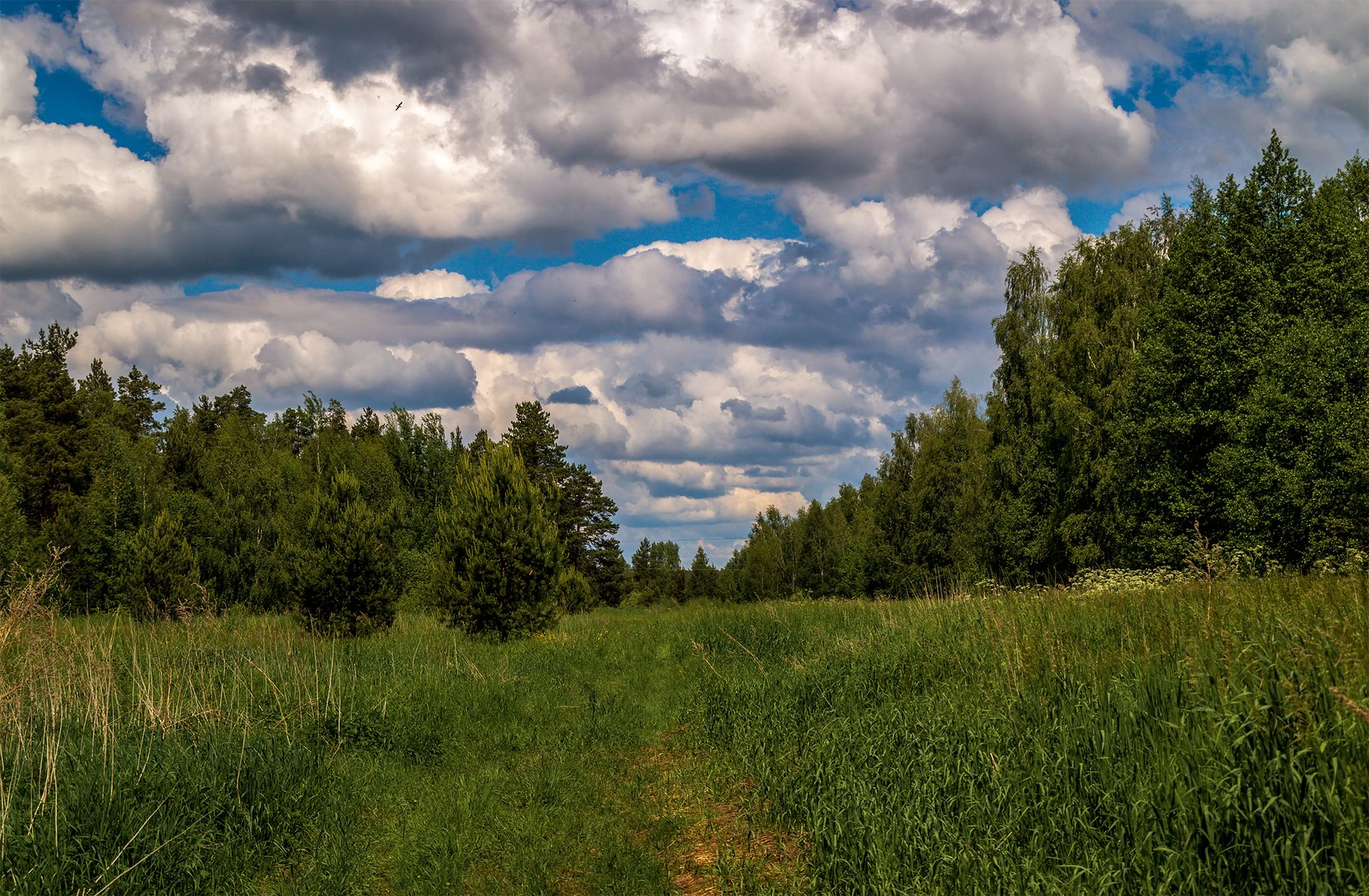 Облака на лесом.