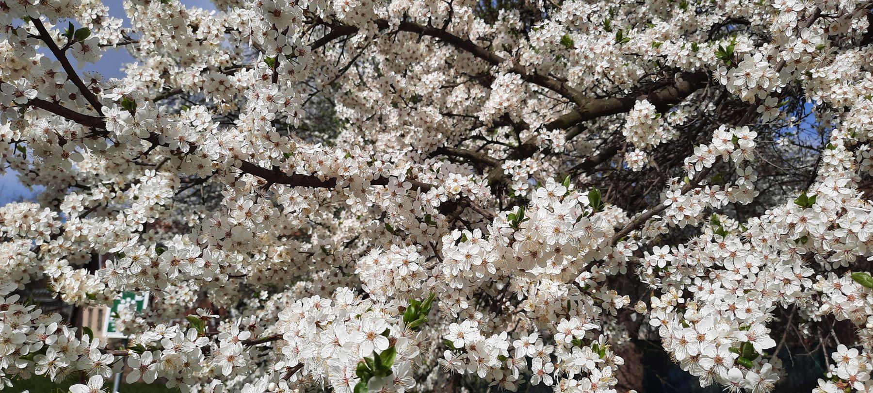 Пришла весна весна цветы