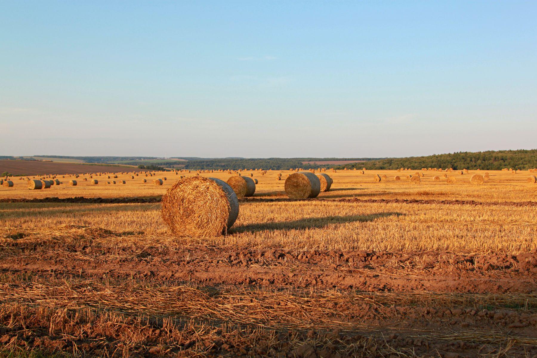 поле пейзаж поле небо лето природа