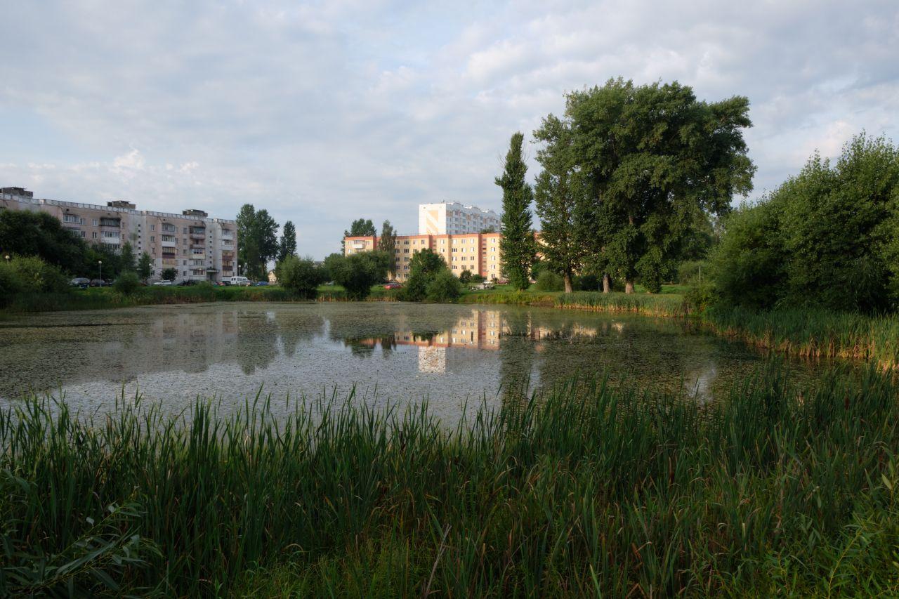 Заросший пруд утро пруд здания трава деревья небо облака