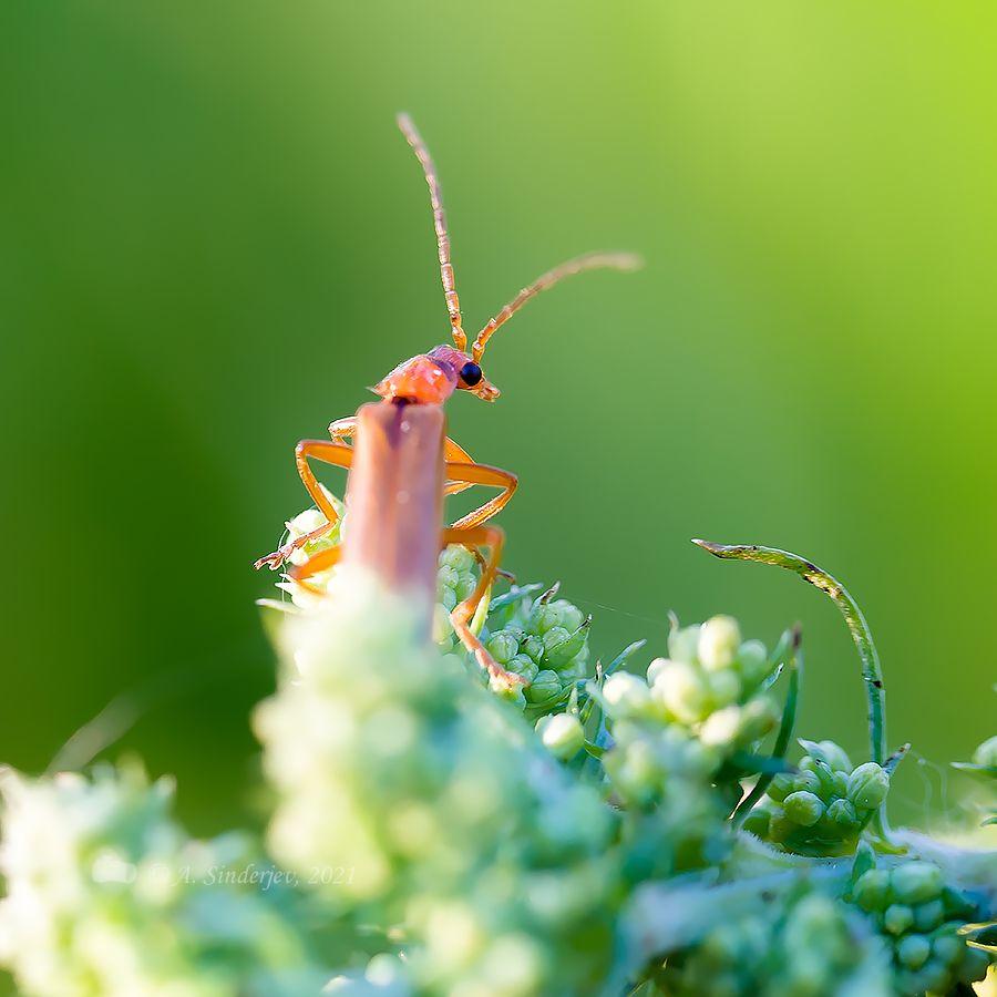 В дозоре жук макро насекомое природа