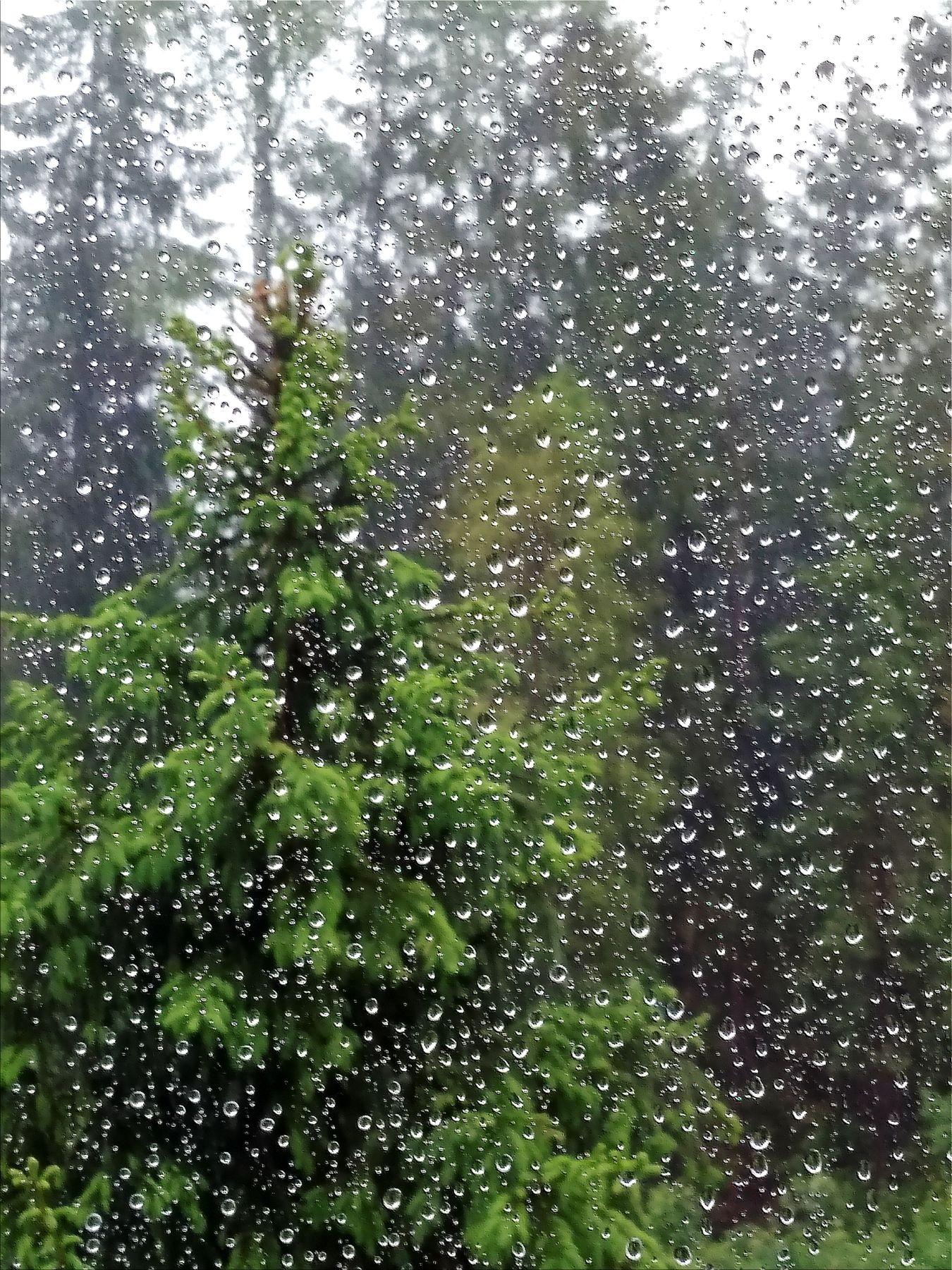 Полгода плохая погода дождь