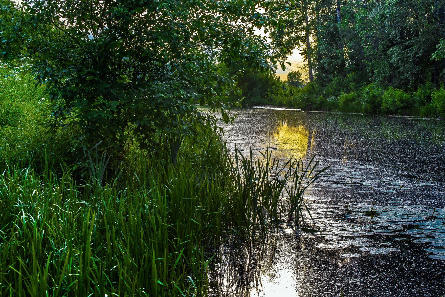 Кусочек вечернего Лета,,,,, лето природа пейзаж вечер река Россия