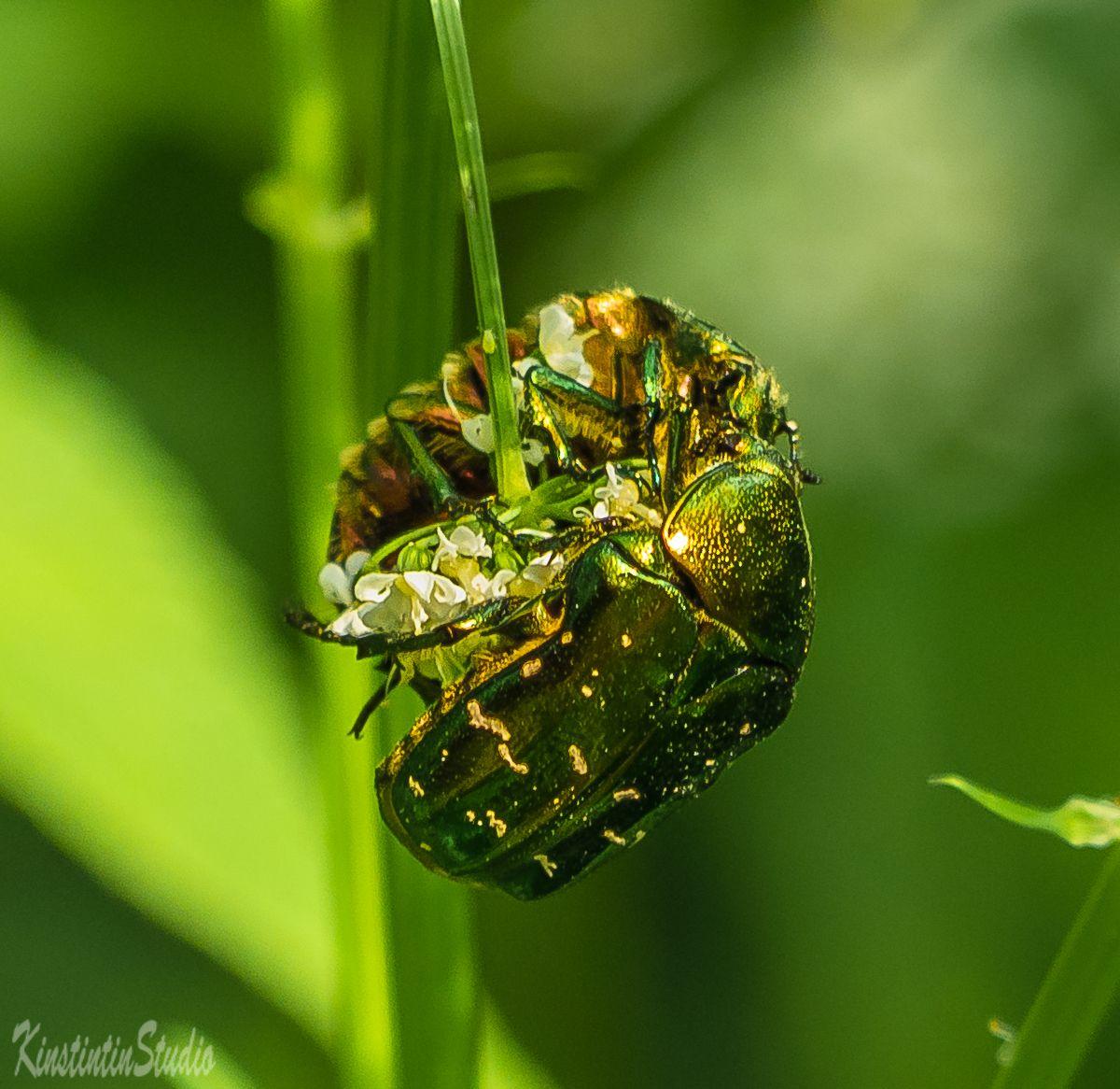Жуки..Симметрия! жук симметрия весна май