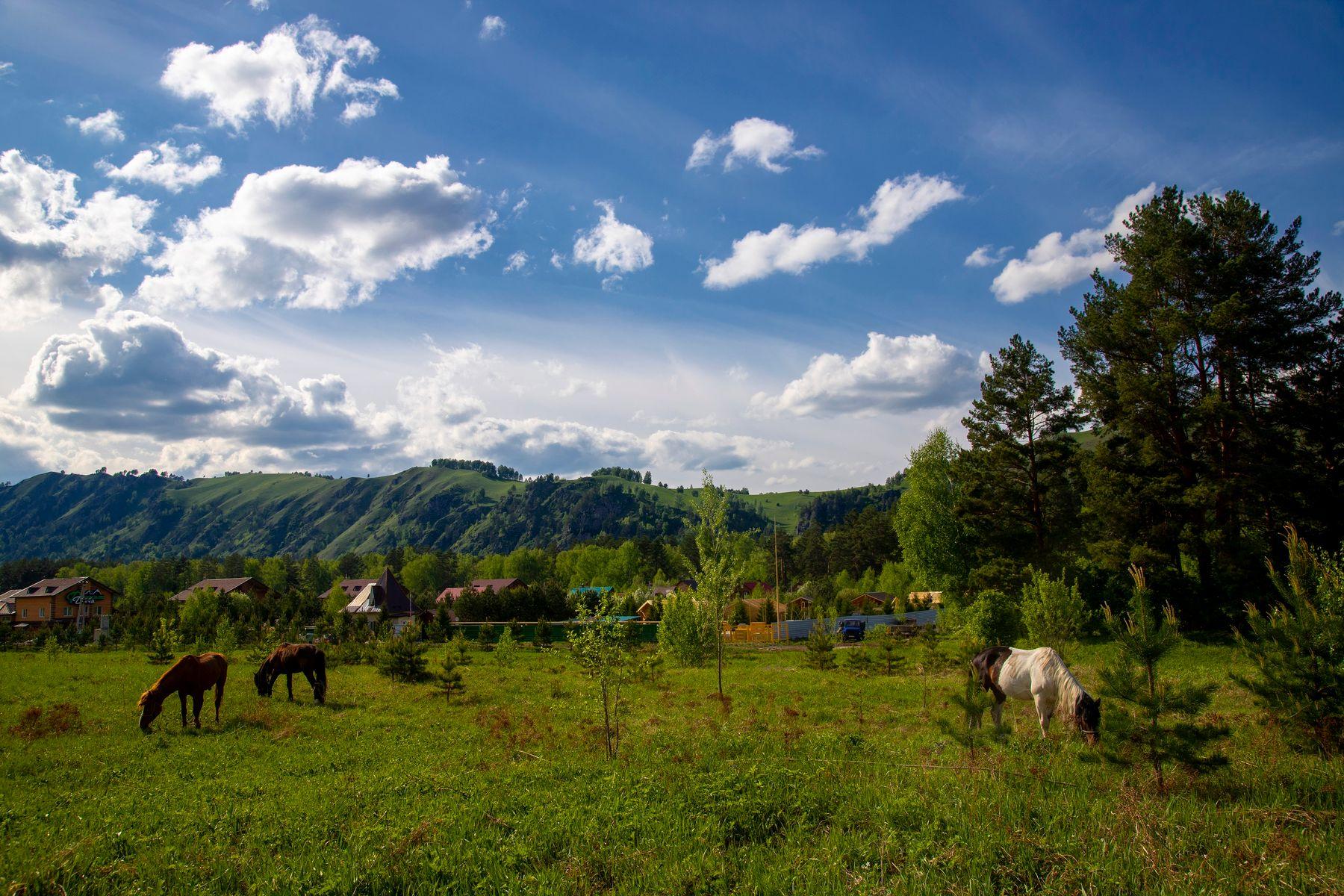 Сельский пейзаж Село