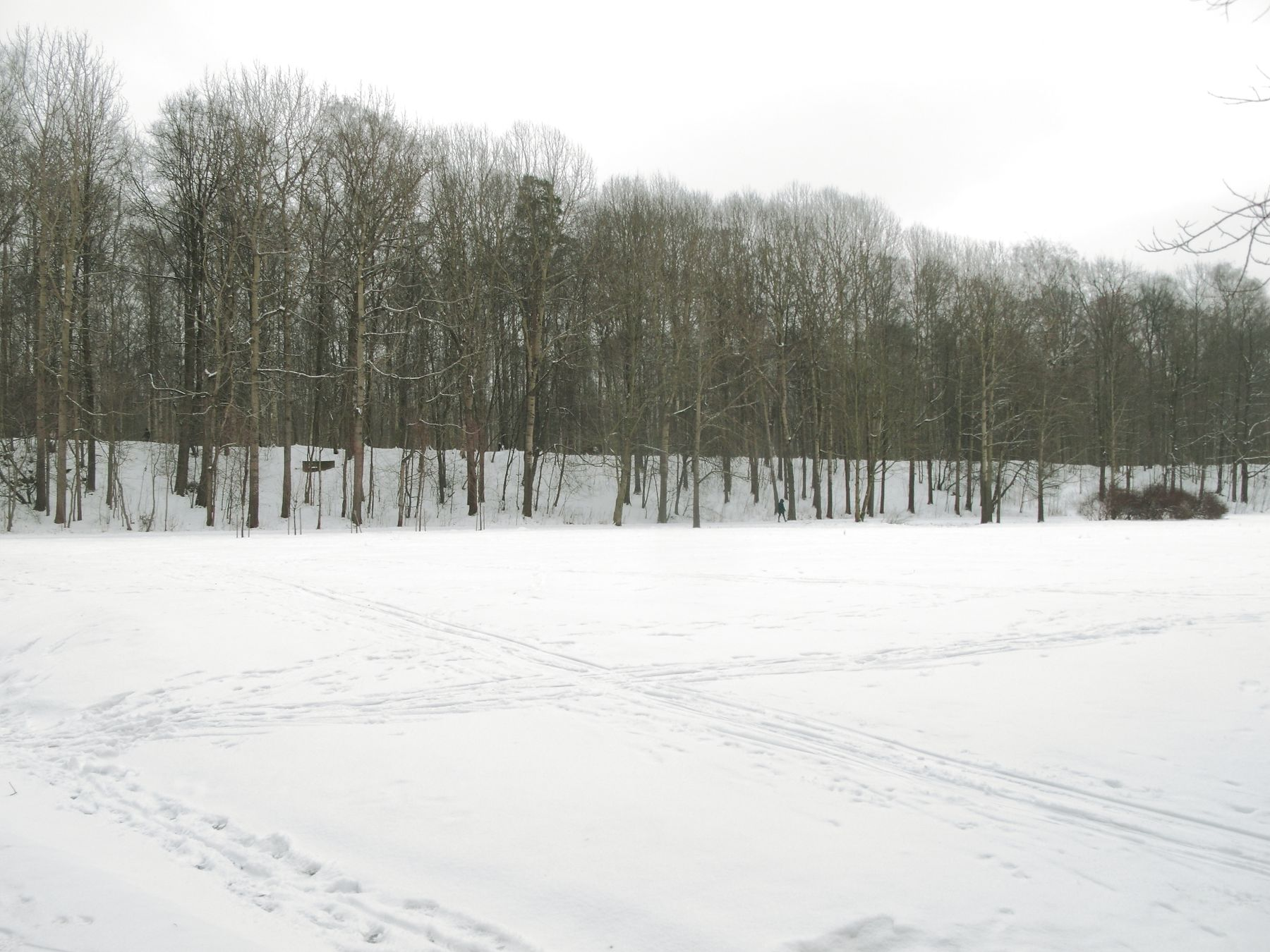 Зимний этюд зима природа Удельный парк