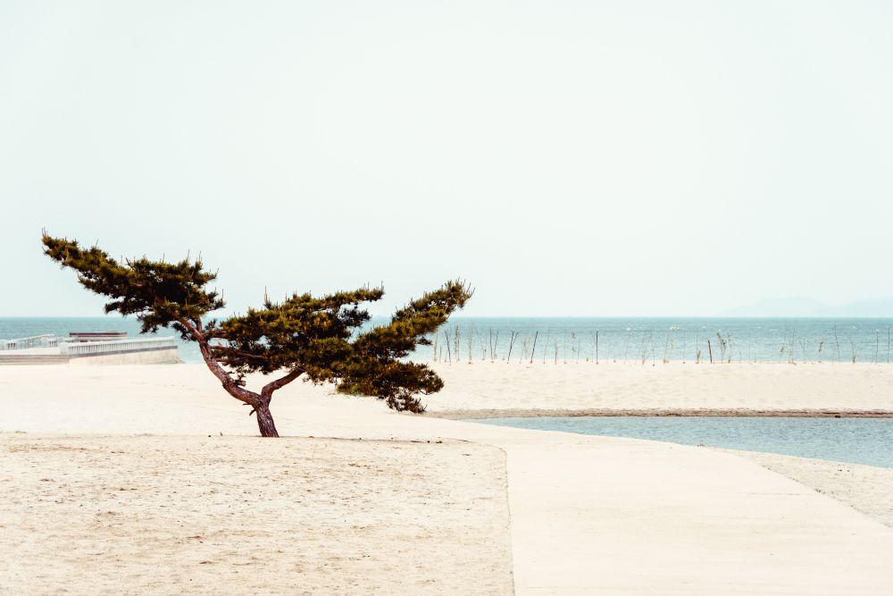 Безмятежность Корея Северная КНДР пейзаж Восточное море Японское берег безмятежность природа дерево вода минимализм