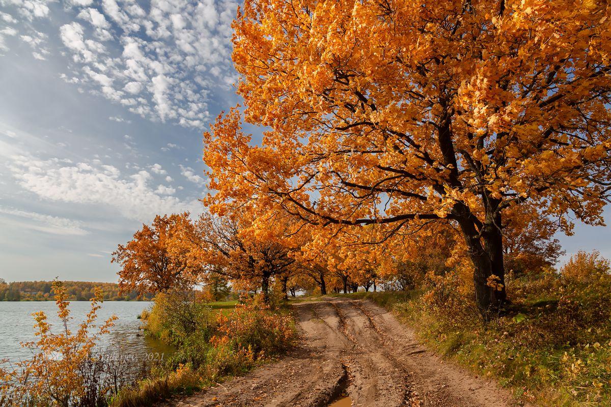 Осень возле озера дубы деревья осень пейзаж озеро дорога
