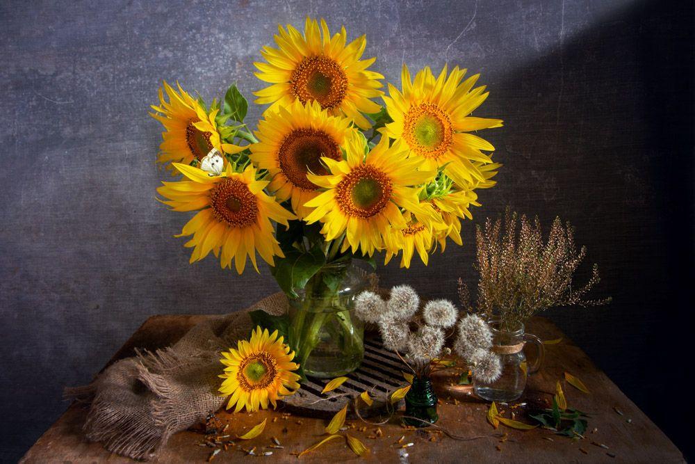 Солнечные цветы Лето натюрморт с подсолнухами одуванчик цветы букет подсолнух солнце