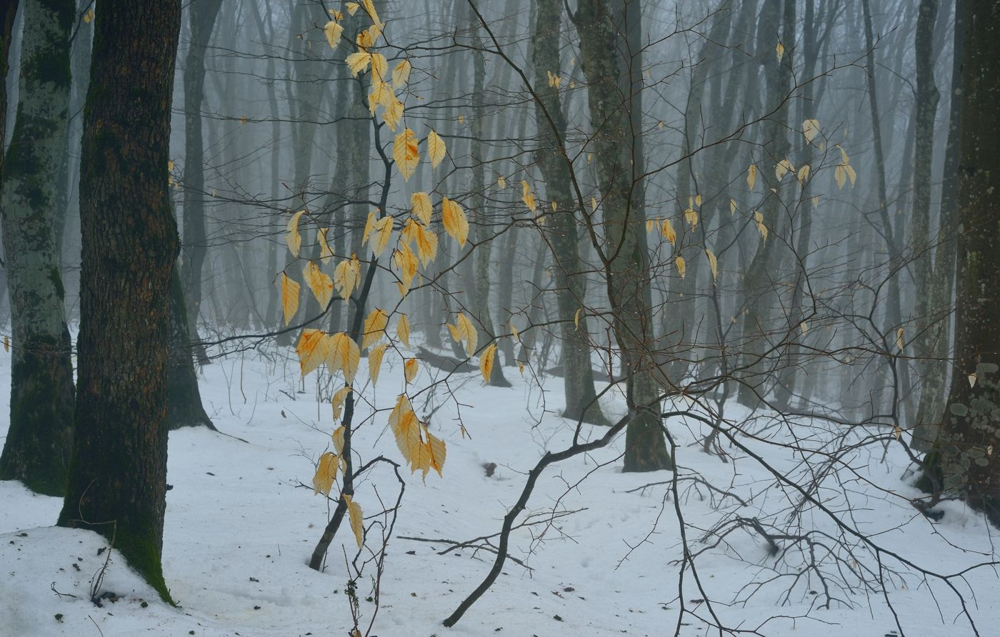 Воспоминание об осени зима лес снег листва