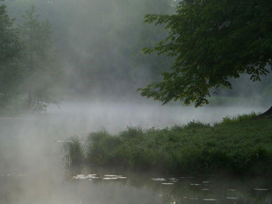 Утро на пруду..........