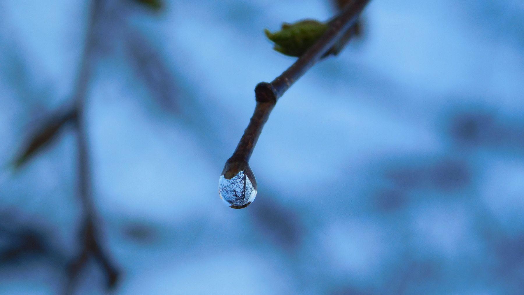 Березовый сок весна макро береза вода капля отражение