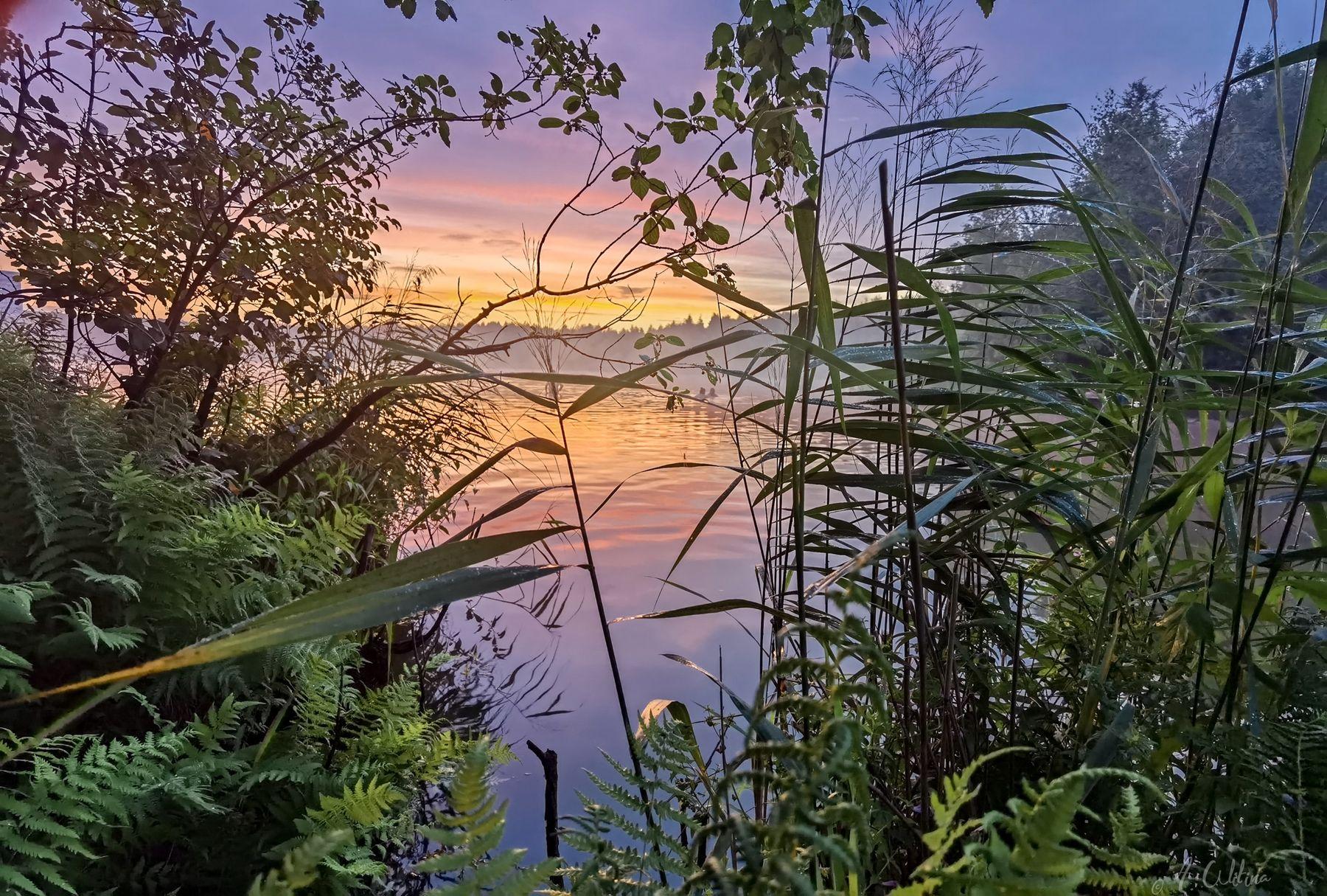 Туманный вечер на озере озеро туман вечер закат облака трава папоротники лес