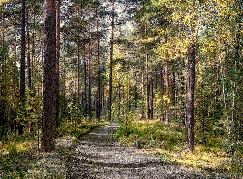 ***В осеннем лесу.