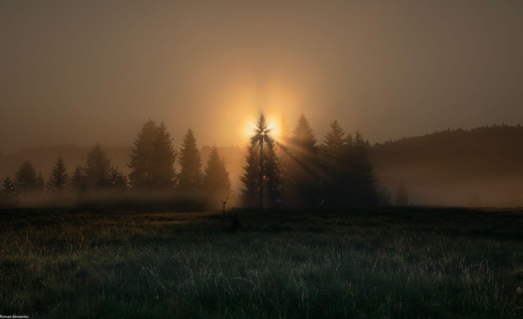 Восход солнца среди сосен сербия восход рассвет сосны пейзаж