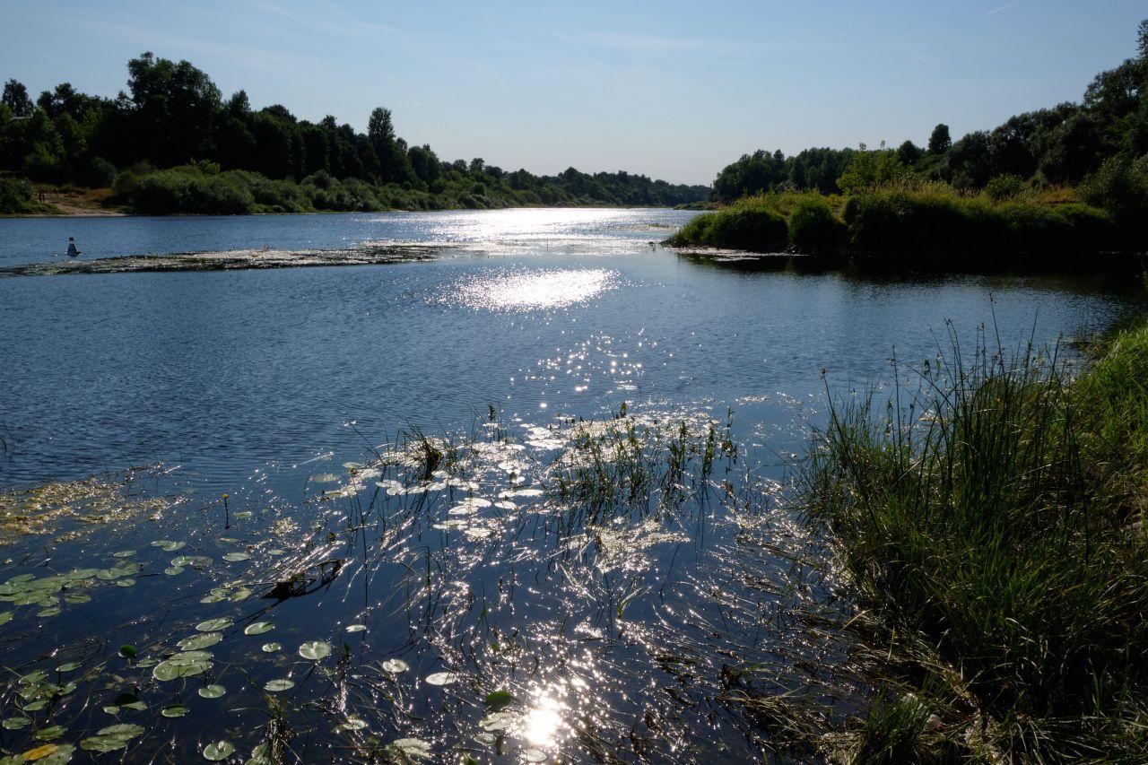 Солнце над рекой река солнце блики кувшинки трава деревья берега