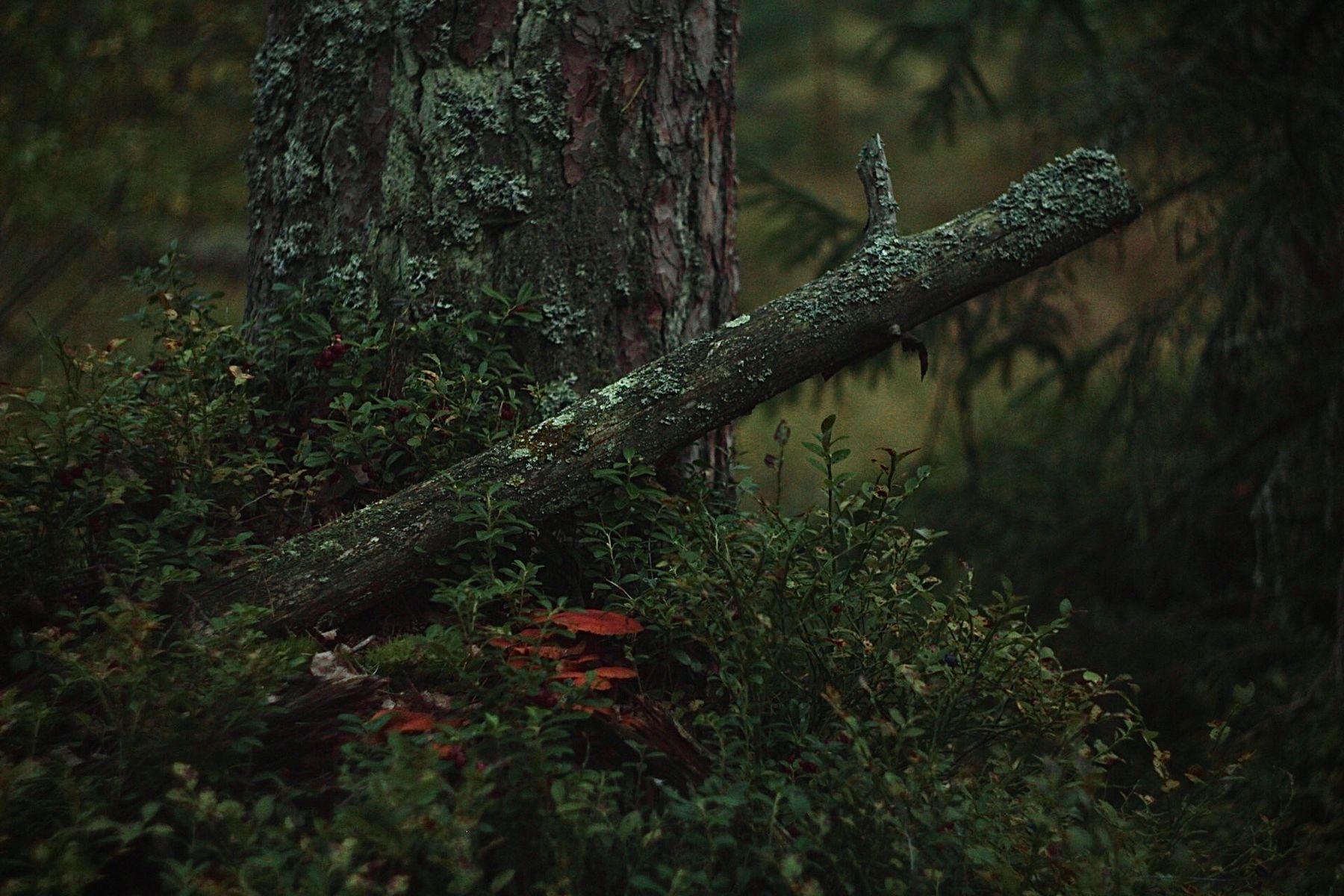 *** Лесной пйзаж осень