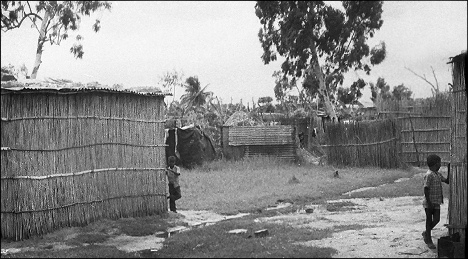 Забытое из Мозамбика: застенчивые