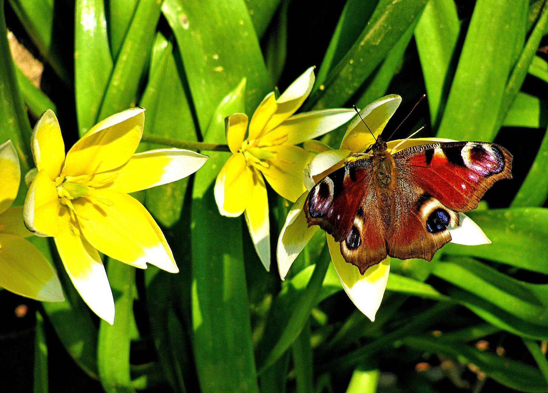 Бабочка на цветке бабочка цветок весна