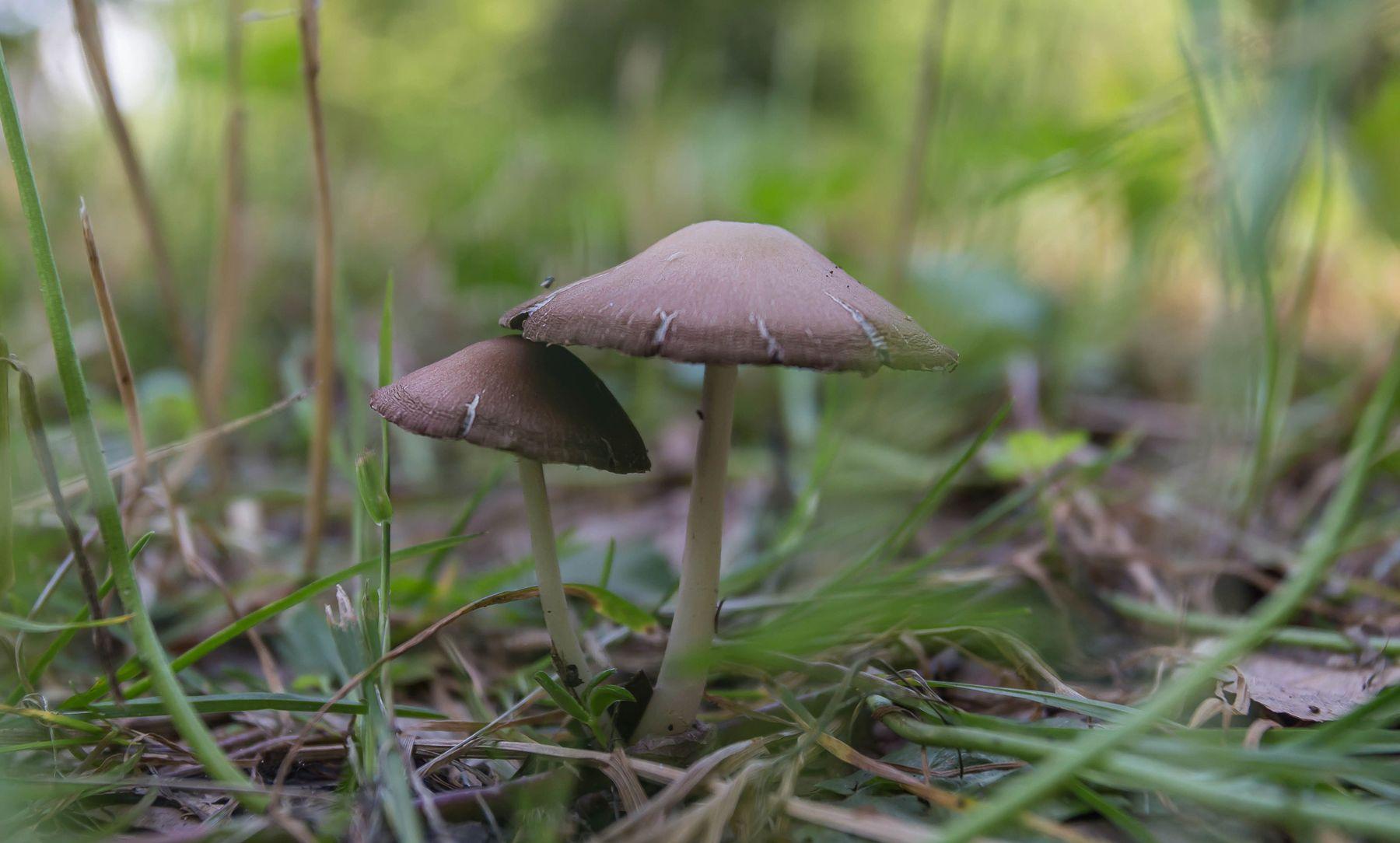 Друзья Природа грибы трава