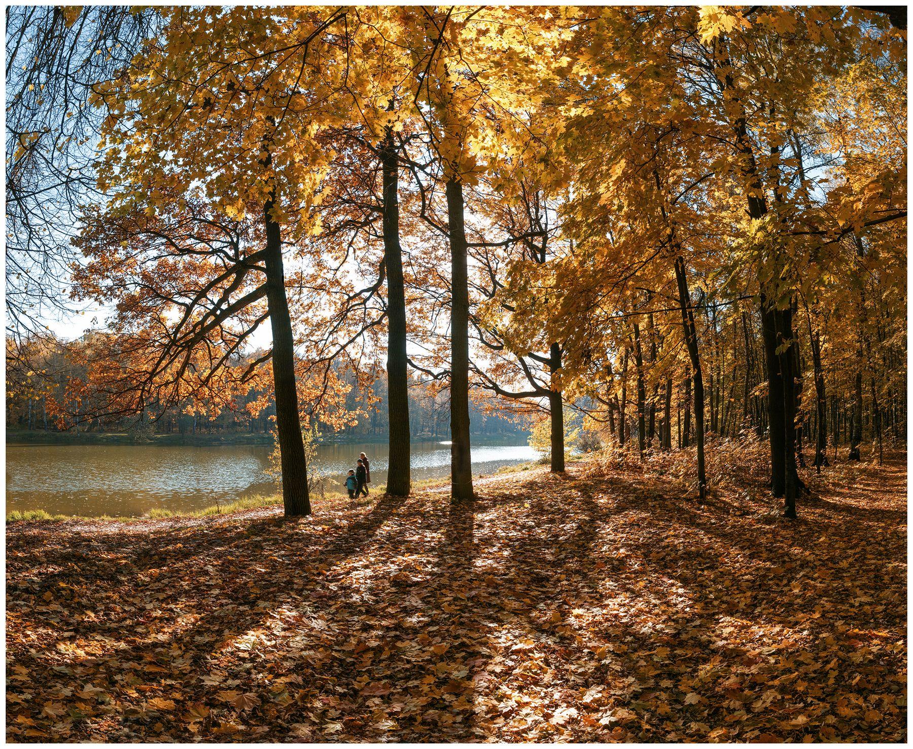 ***Кленовая роща. Золотая осень клены пруд три фигуры роща