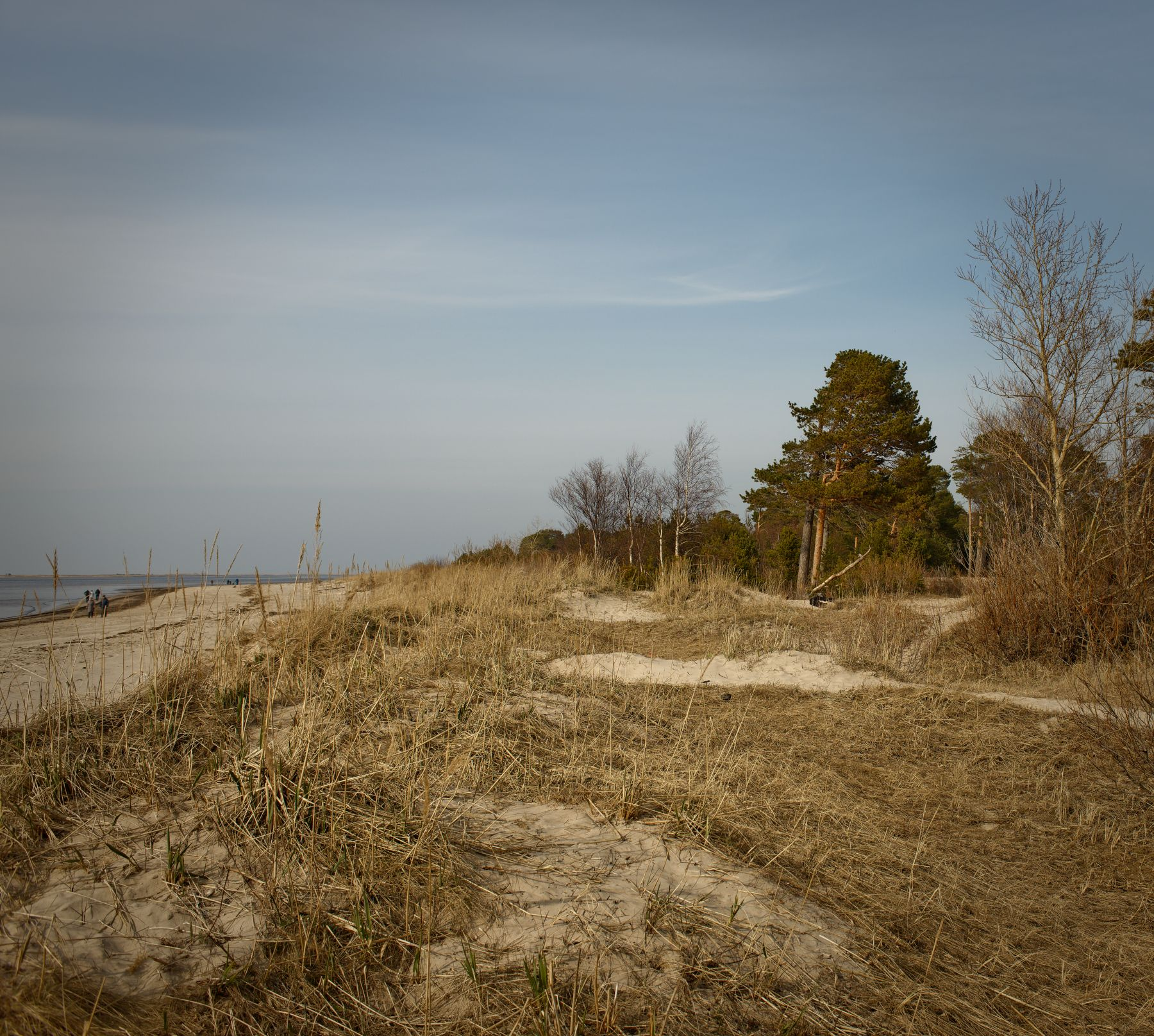 Ягры. Берег Белого моря. (2)