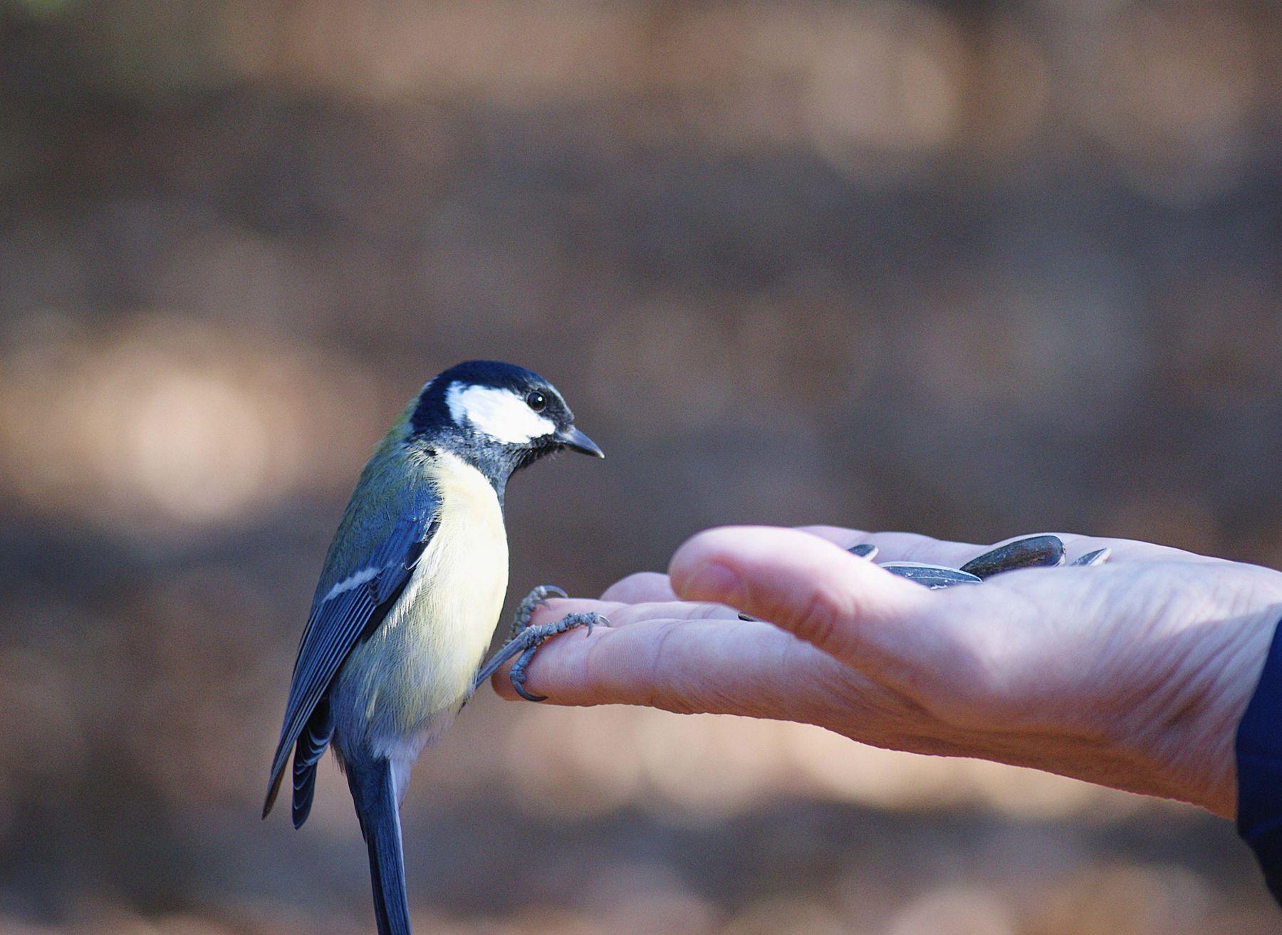 Это че такое, взятка что ли .. рука угощение взгляд птица синица