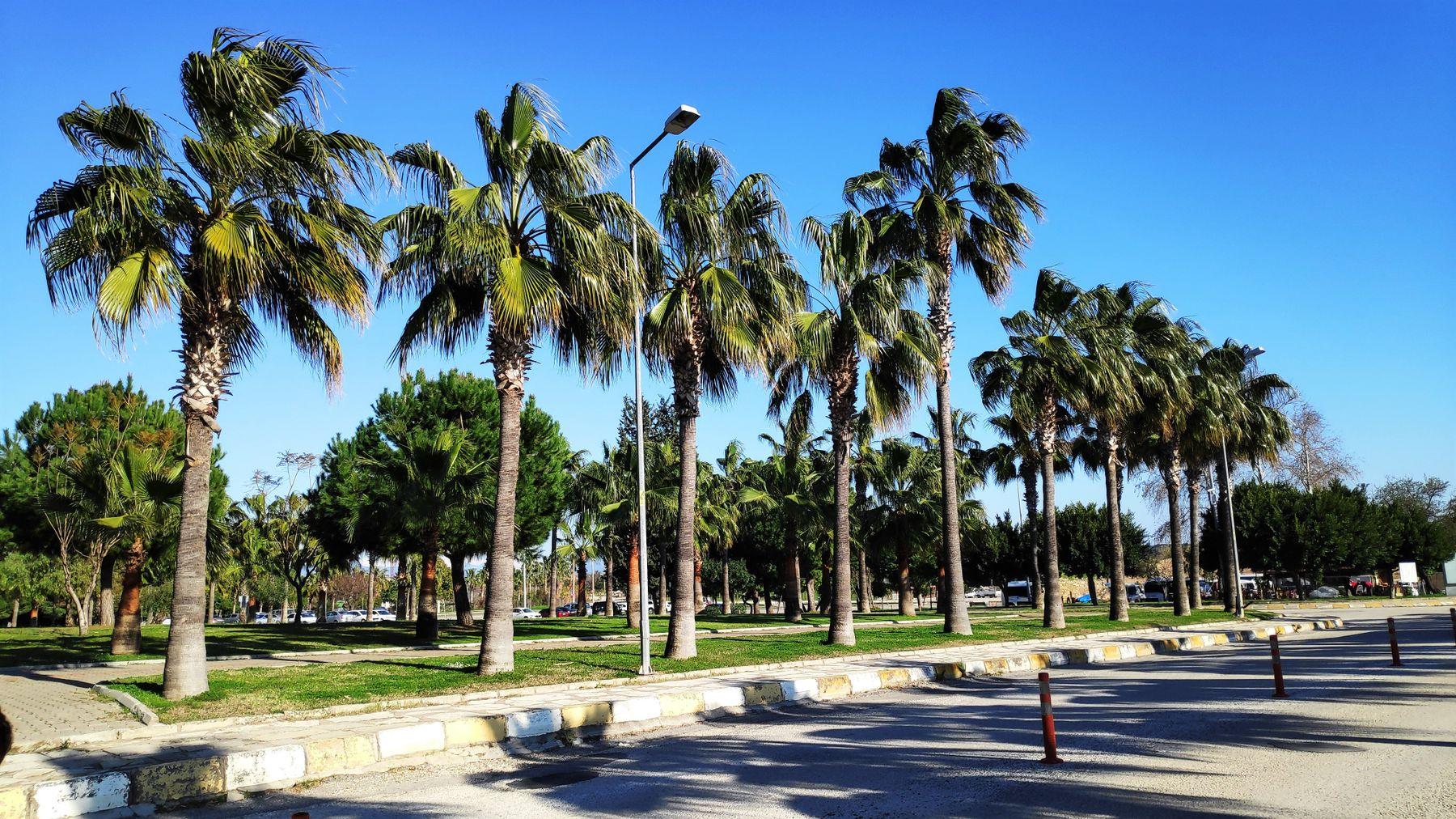 Palm Trees пальмы Турция тени солнечный день природа