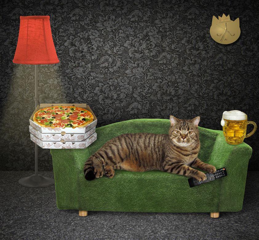 Идеальные выходные ... кот Фунтик юмор выходные уют отдых