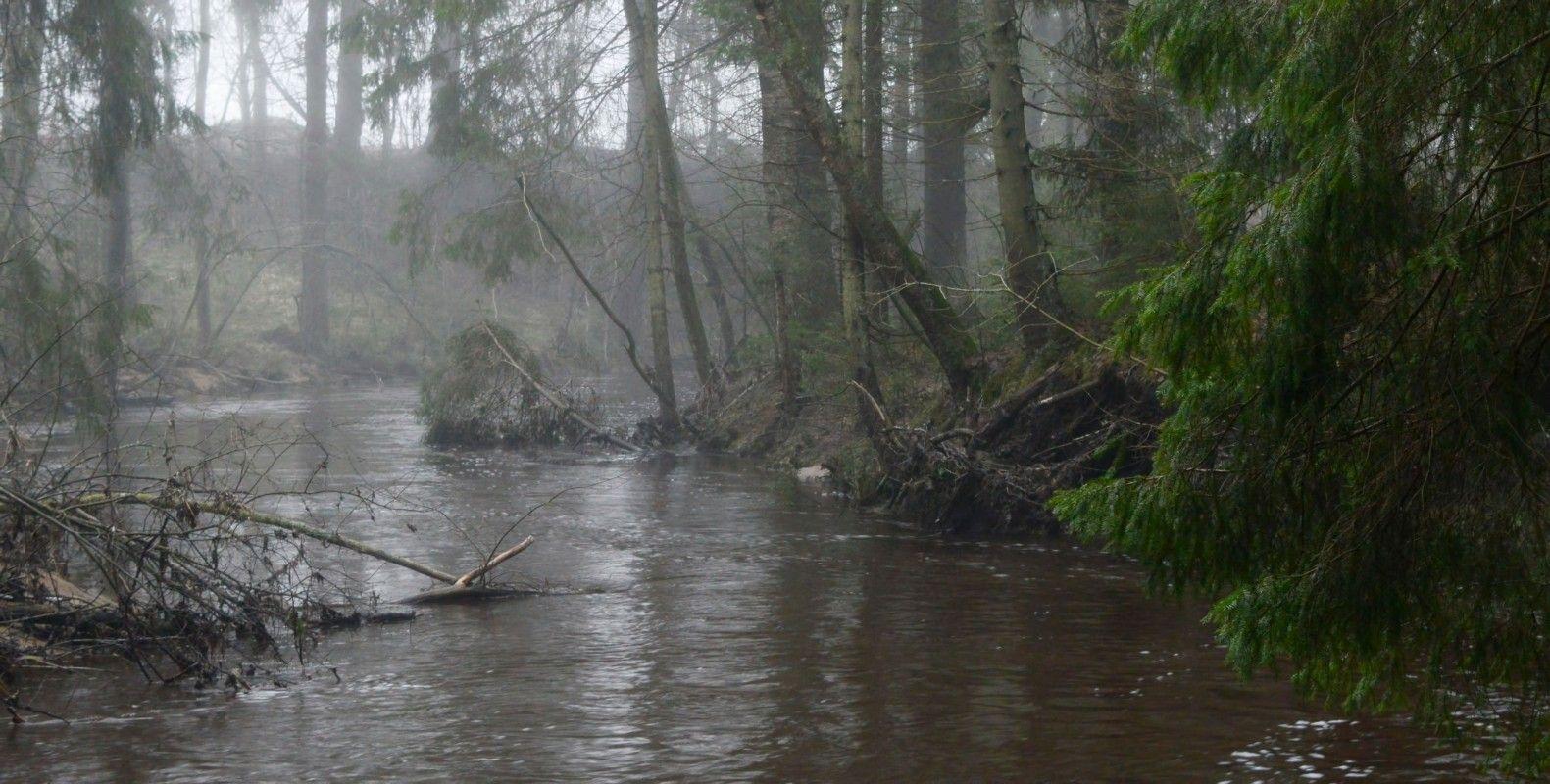 В весеннем лесу.......