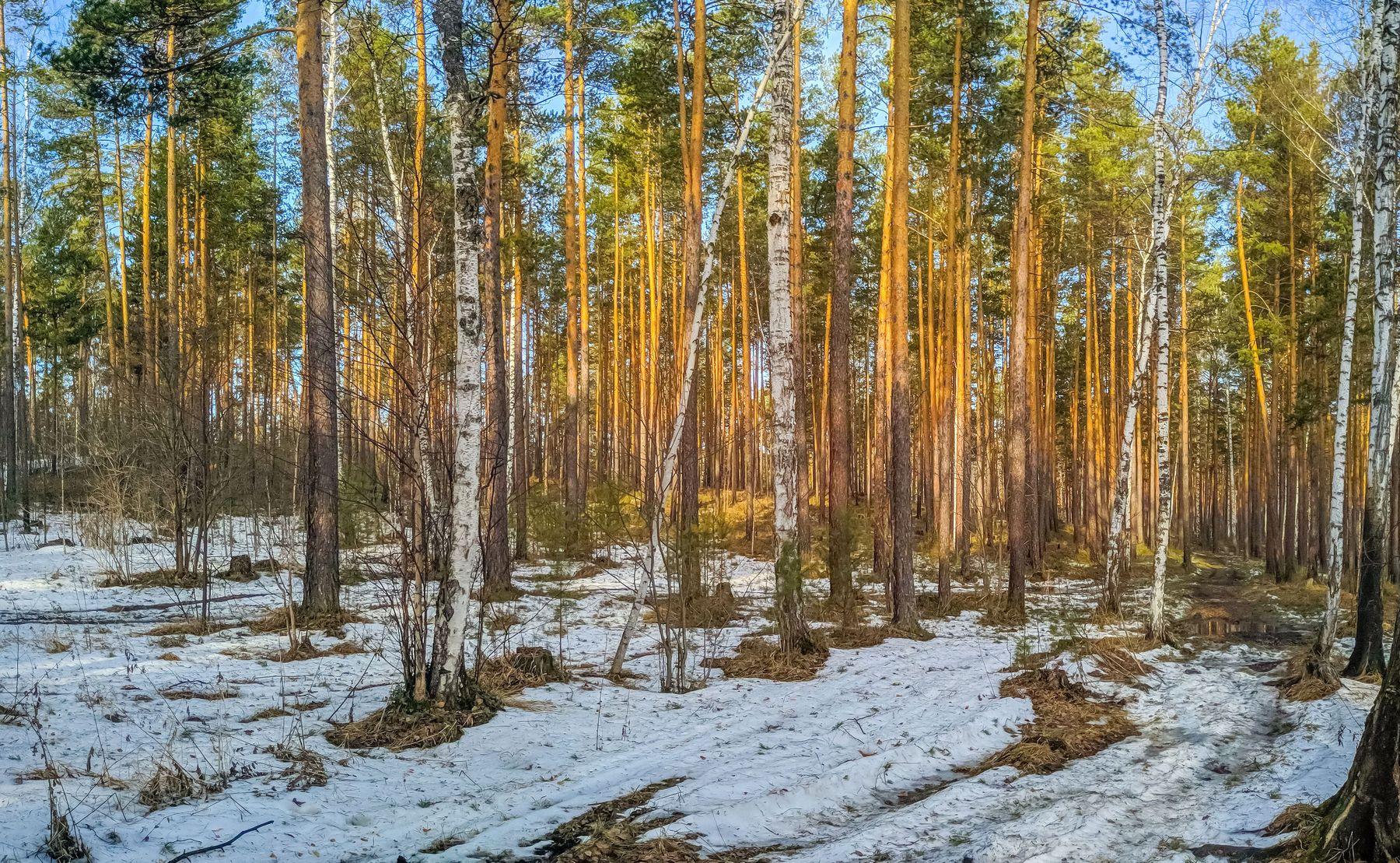 Весенний лес. (панорама) Южный Урал Миасс Тургояк природа лес весна Апрель