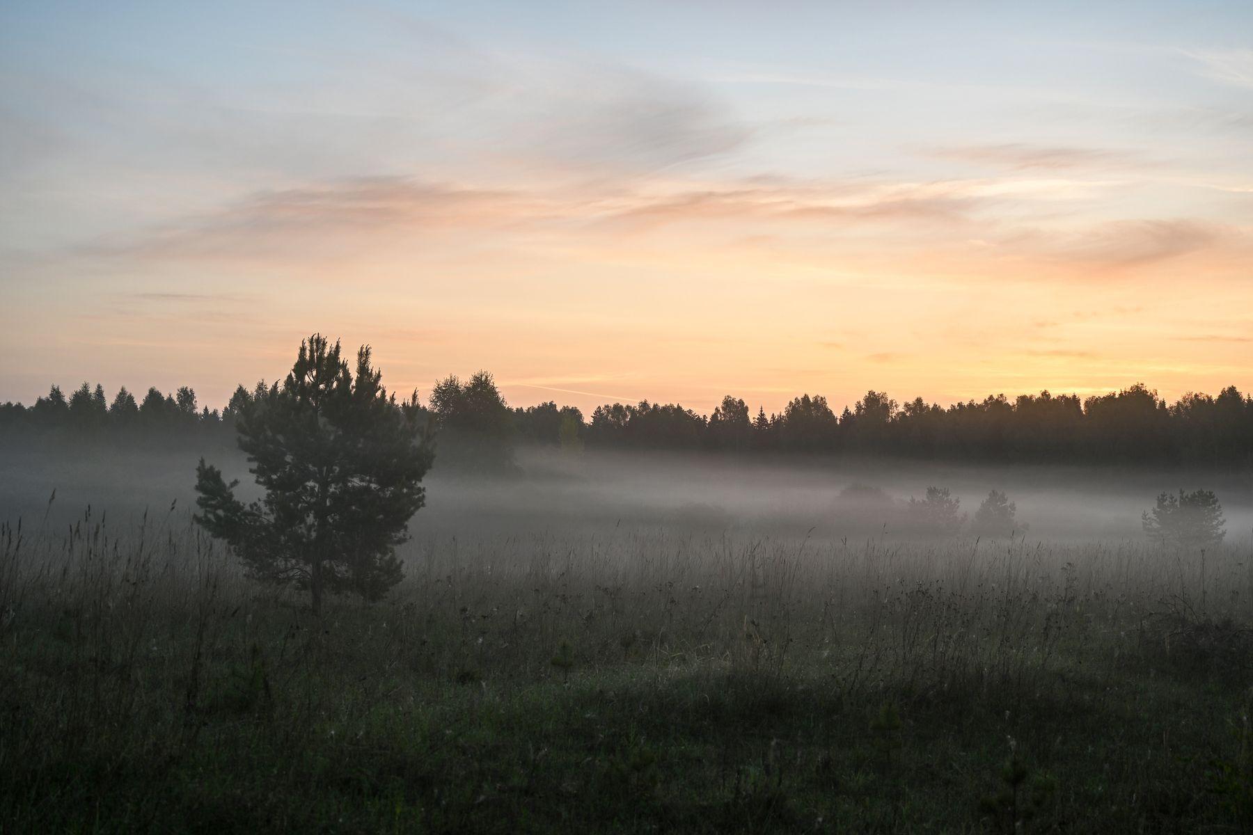 Предрассветные сумерки середины мая утро туман лес дерево
