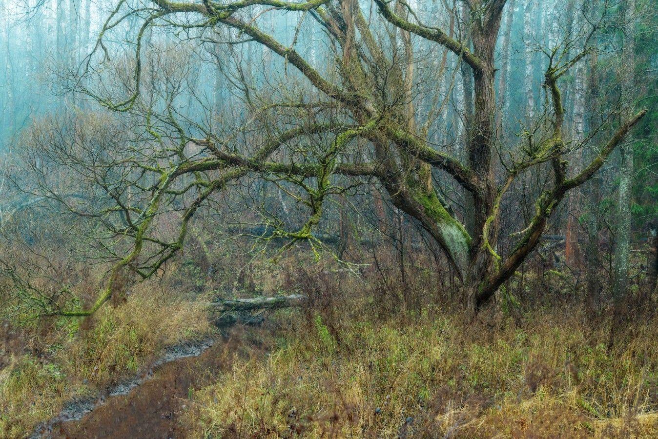 Лесной монстр петербург осень невский лесопарк туман утро дерево