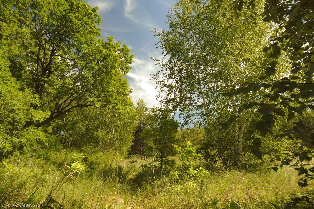 В летнем лесу пейзаж природа лето лес
