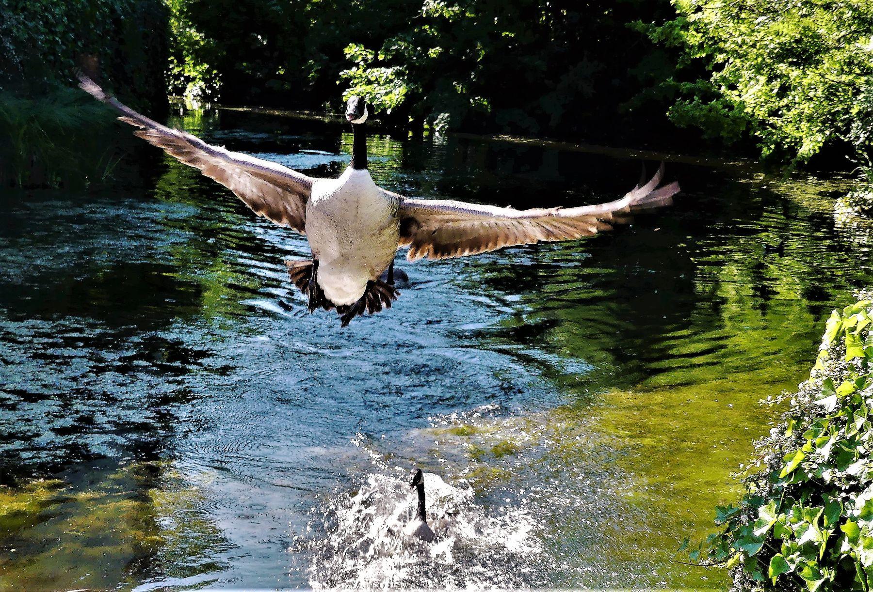Взлётная полоса Водоём утки