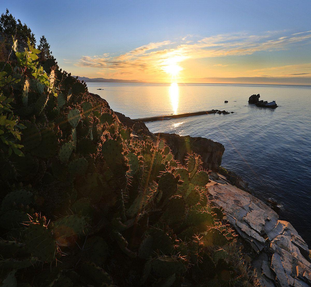 Утес Карасан Крым алушта Карасан Утес пейзажи Крыма фотограф Ялта Черное море опунция кактус